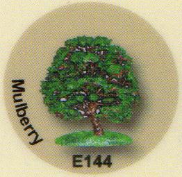 E144 マルベリー(クワの木)