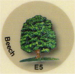 E5 ブナの木