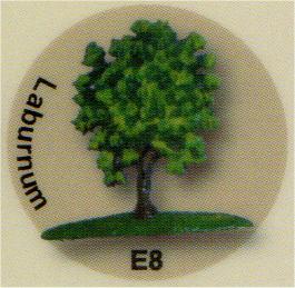 E8 キングサリ