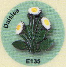 E135 デイジー