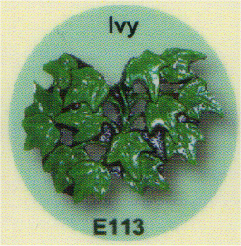 E113 アイビー