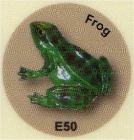 E50 カエル
