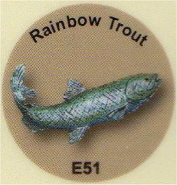 E51 ニジマス